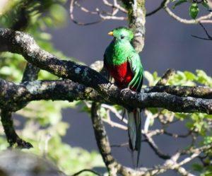 Volunteer Guatemala_Quetzal 2